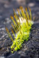 on the rocks by alenbernardis