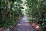 Stock : Natures Canopy walkway