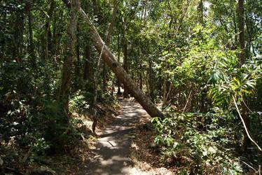 Stock : Fallen Tree by Deaths-stock