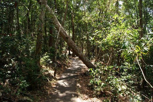 Stock : Fallen Tree