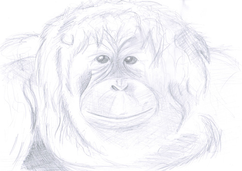 Wild Animals - Orangutan by Bianka98