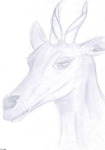 Wild Animals - Antelope by Bianka98