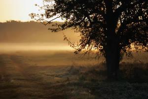 A hazy morning... by schaafflo