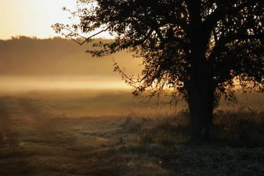 A hazy morning...