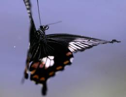 in-flight by schaafflo