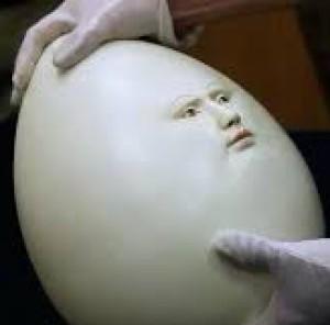 pastelknees's Profile Picture