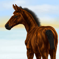 Timberlake as foal