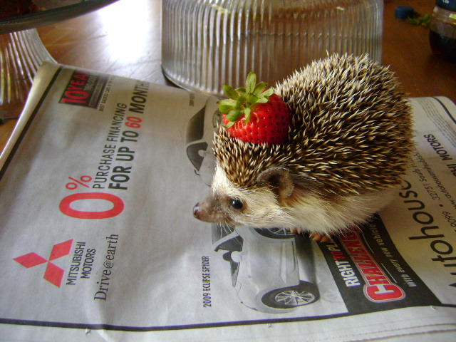 Strawberry Hat