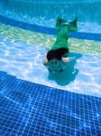 swimming mermaid by winterwhiterose