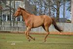 Gallop Stock1