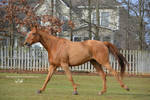 Gallop Stock2