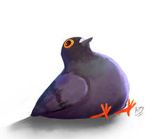 Pigeon by K-e-t-t-y