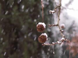 snowy balluca by stesio54