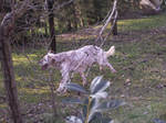 dog who like to jump by stesio54