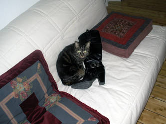 the cat with the boot
