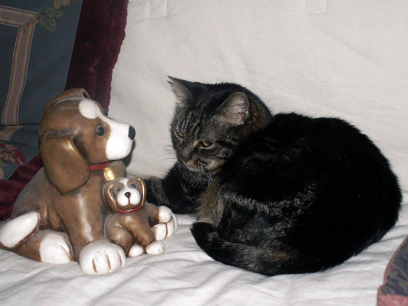 cat vs dog by stesio54