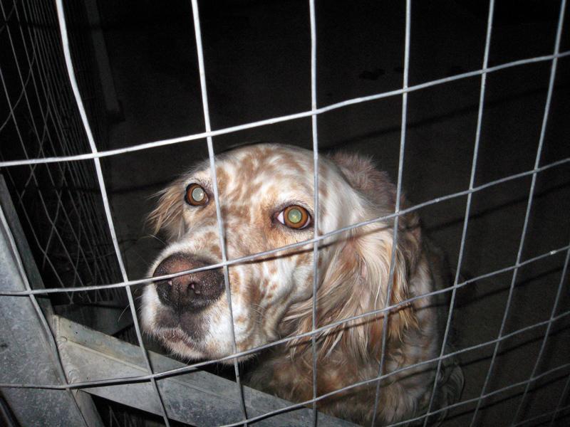 dog in the dark by stesio54