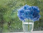 Hydrangea - Rainy Day by planet0
