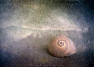 Shy Sea Shell