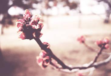 Flush of Spring by RamandusDaughter
