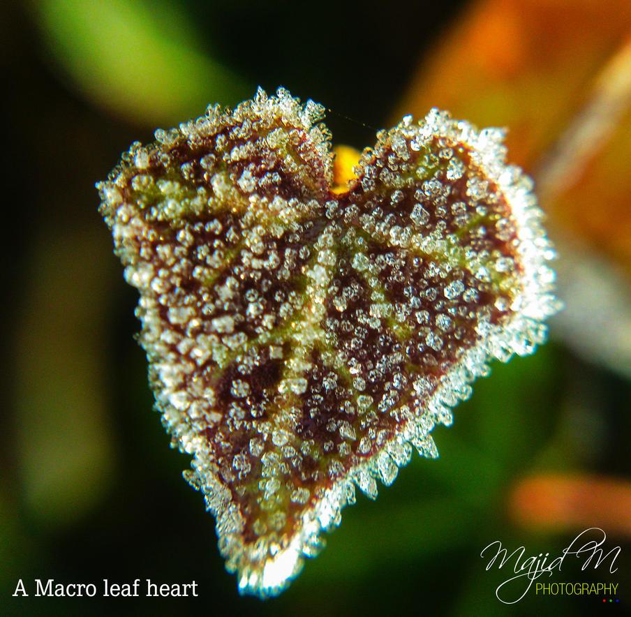 A Macro Leaf Heart by meanart