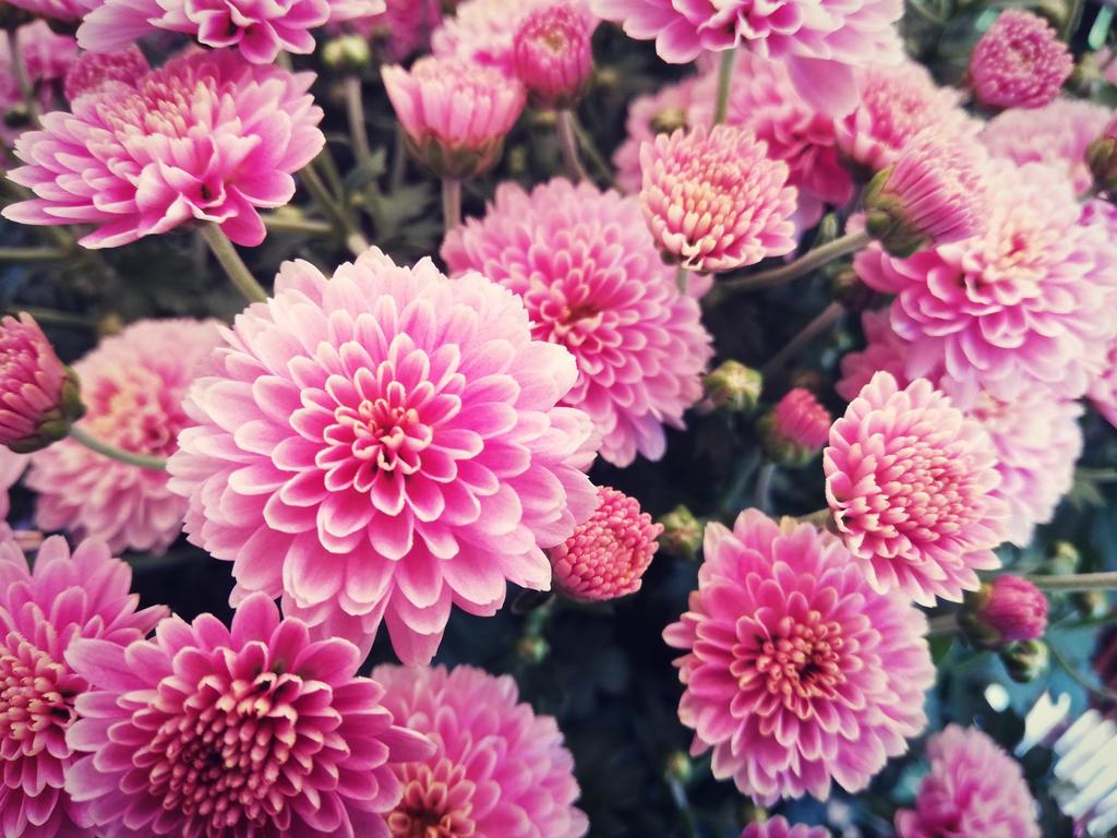 Pink flowers by maikpes on deviantart pink flowers by maikpes mightylinksfo