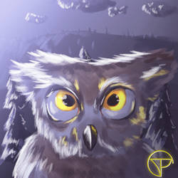 Owl by tipaco99