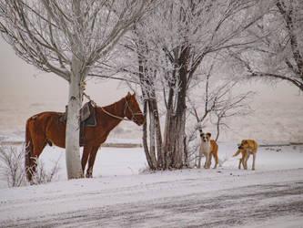 Classical winter by palenka