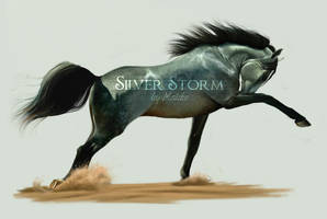 Equideow Gaia - Silver Storm by JulieBales
