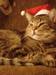 Christmas-cat.