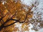 Autumnal Beauty (Original, Unedited)