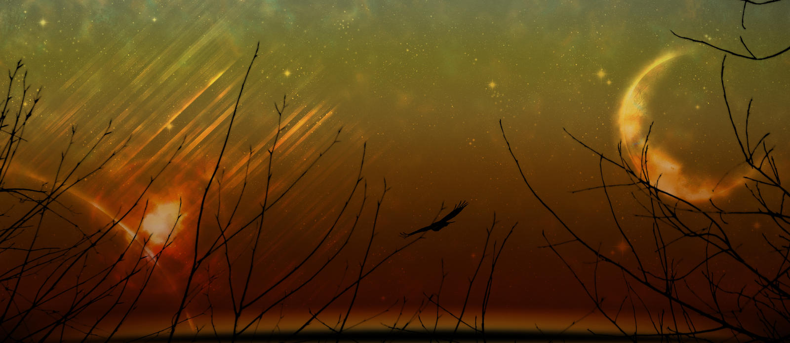 Wallpaper Space Bird by Zulma-san