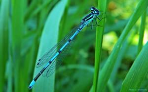 Blue hunter by siriablacky