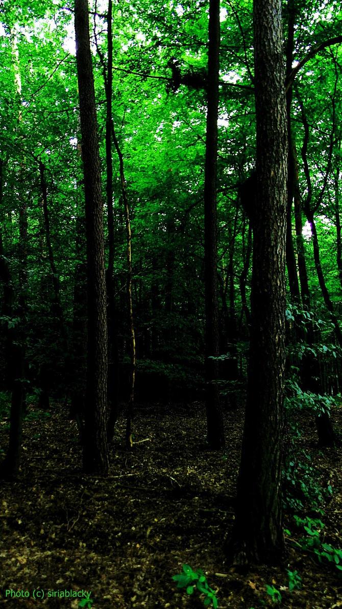 Dark green forest by siriablacky on deviantART