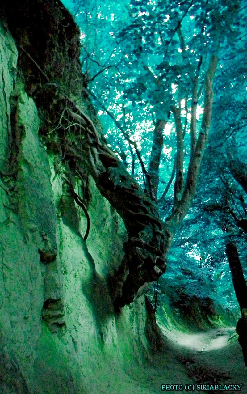 Forest dragon by siriablacky