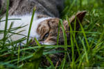 Los ojos de gato by siriablacky
