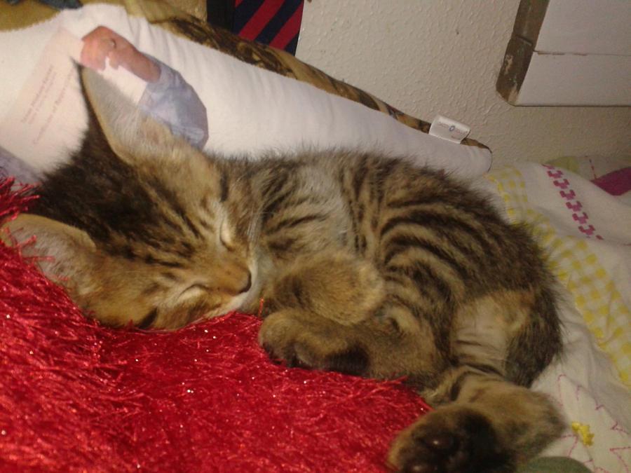 Tigger the kitten by fairytalekitty