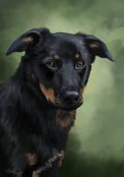Another pet portrait by RachelleFryatt