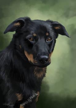Another pet portrait