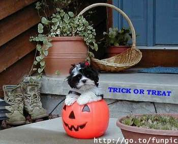 Trick or Treat Puppy by smallvillerose