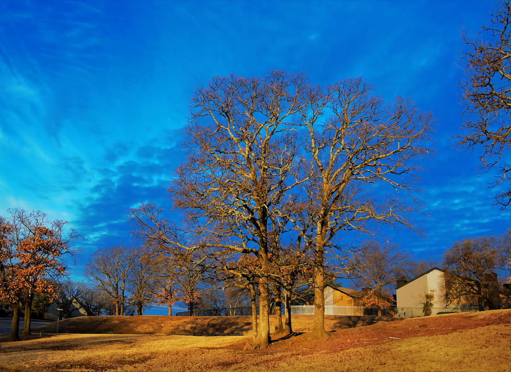 Trees Morning vII 0162-012117 by KeithPurtell
