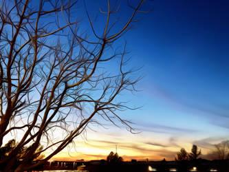 Half Tree #0292 1/9/19 by KeithPurtell