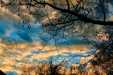 Pecan Tree Limbs in Winter #1421 12/14/19