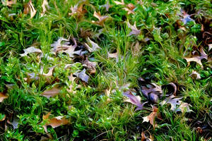 Grass and leaves #1537 3/25/20