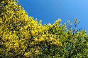 Leaf Ridge #1563 4/10/20