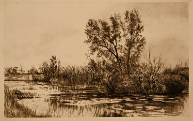 Trees in slough near Bethune a by martianhalo