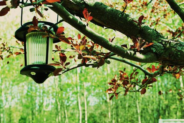 Lantern by sara47488