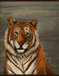 tiger by madShanni