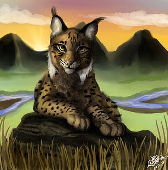 .:Endangered Iberian Lynx:. by matrix9000