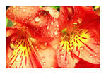 Red Flower One